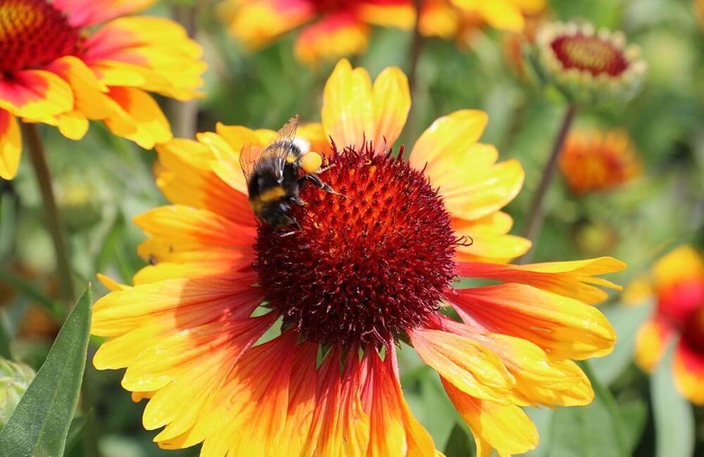 Gärtnerei Zmugg - Zimmerpflanzen und Heckenpflanzen aus Salzburg - Newsletter
