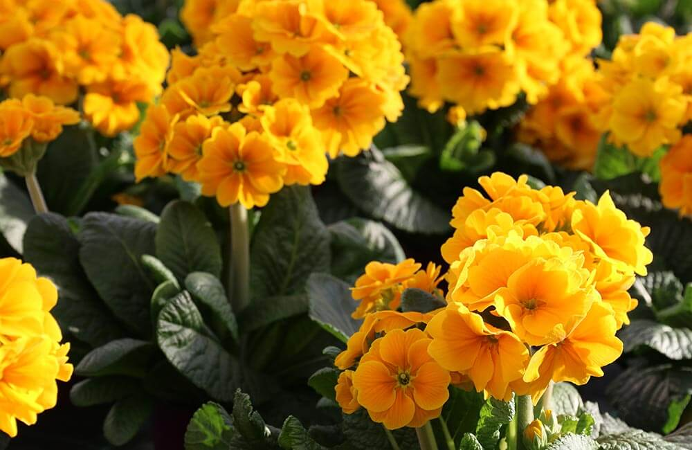 Blumen & Pflanzen - fruehlingsflirt-1000x650