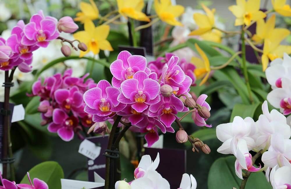 Blumen & Pflanzen - orchidee-1000x650