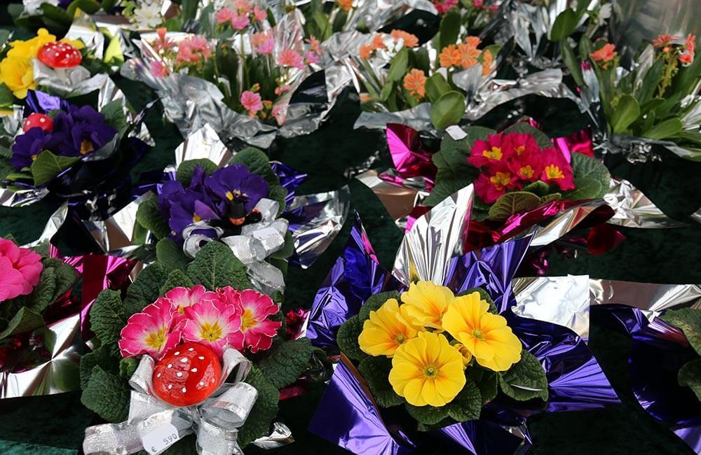 Blumen & Pflanzen - silvester-1000x650