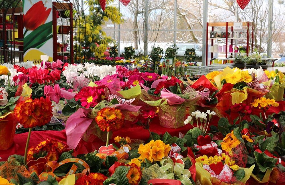 Blumen & Pflanzen - valentins-geschenk-1000x650
