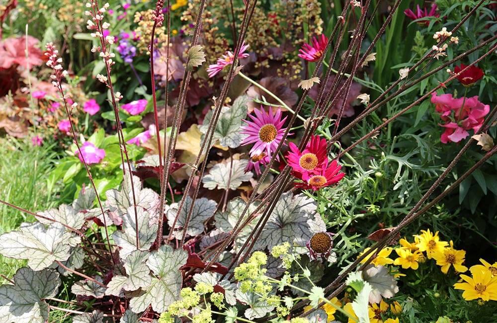Blumen & Pflanzen - blumenbeet-1000x650