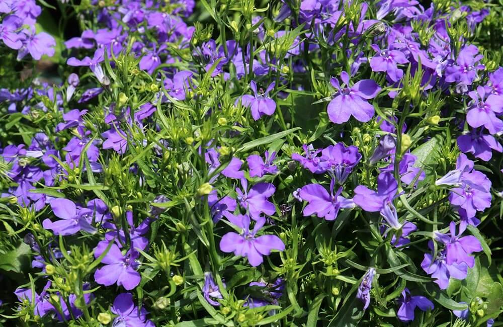 Blumen & Pflanzen - gartenblumen-1000x650