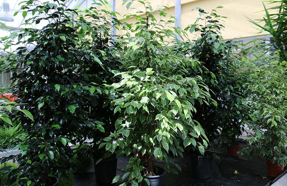 Blumen & Pflanzen - gruenpflanzen-1000x650