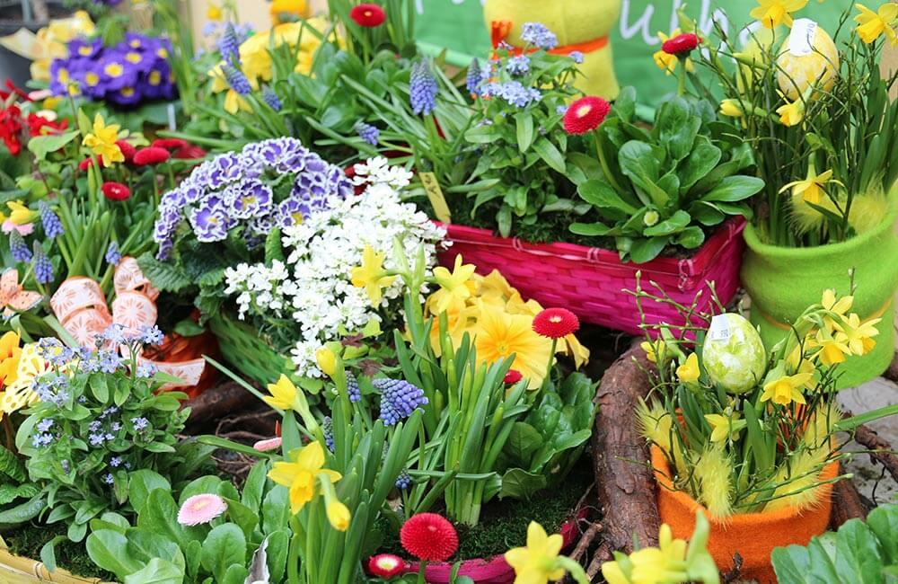 Blumen & Pflanzen - ostern-1000x650