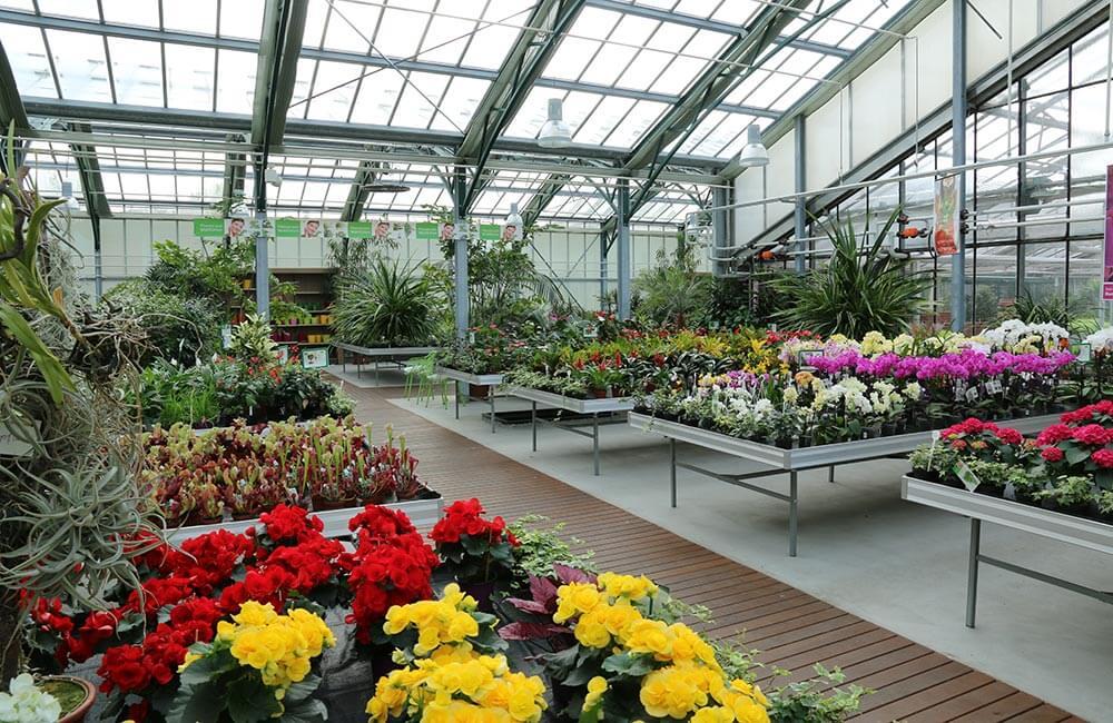 Blumen & Pflanzen - gaertnerei-zmugg-1000x650