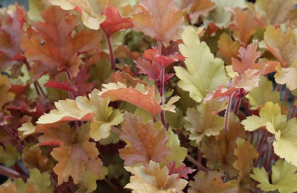 Blumen & Pflanzen - herbstzauber-1000x650