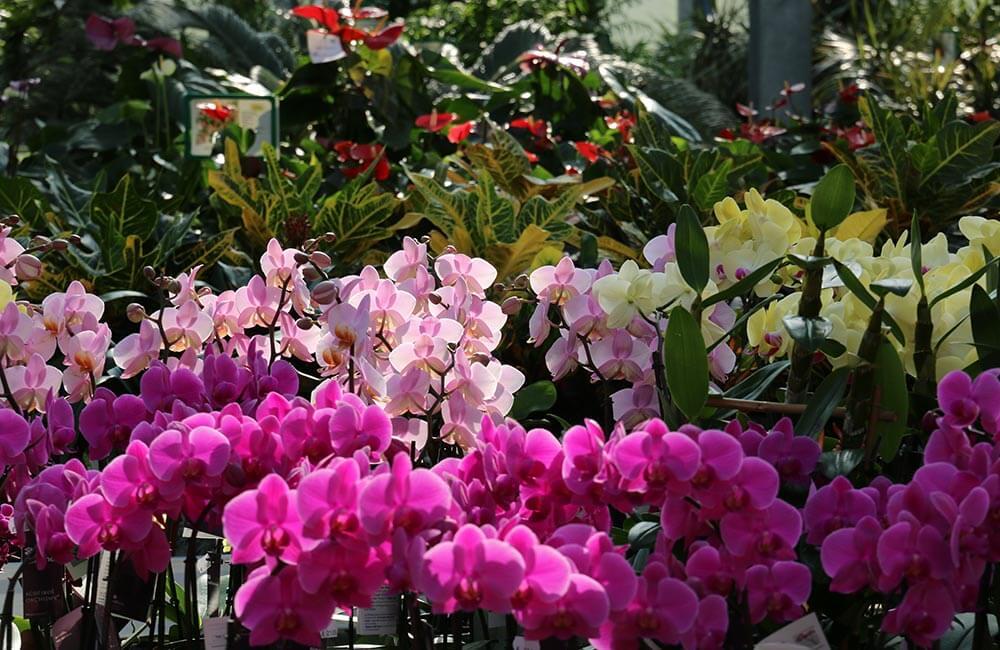 Blumen & Pflanzen - muttertag-geschenk-1000x650