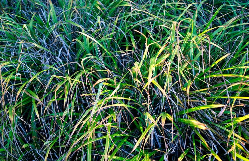 Blumen & Pflanzen - winterharte-kuebelpflanzen-1000x650-2