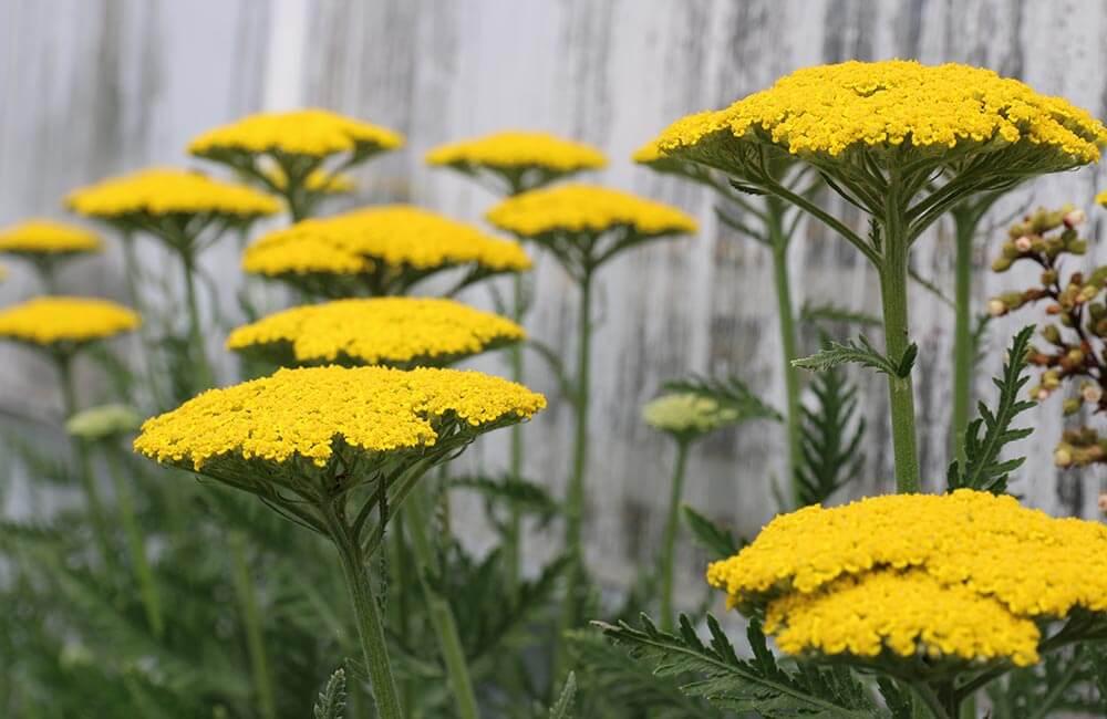 Blumen & Pflanzen - winterharte-pflanzen-1000x650